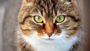 טיפיקאט מזון לחתולים 20 ק''ג