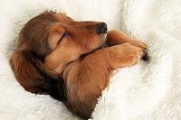 מיטות ומזרונים לכלבים