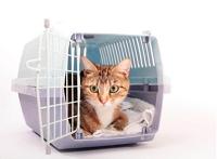 כלובי נשיאה לחתולים