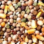 תערובת זרעים ליונים מועשרת 25 ק''ג
