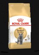 רויאל קנין חתול בריטי 4 ק'''ג