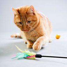 צעצועים ומשטחי גירוד לחתולים