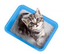 שירותים לחתולים
