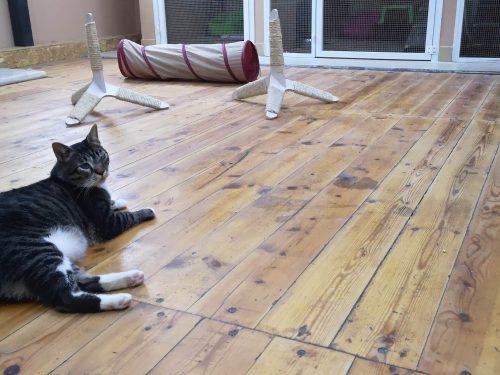פנסיון לחתולים מקצועי