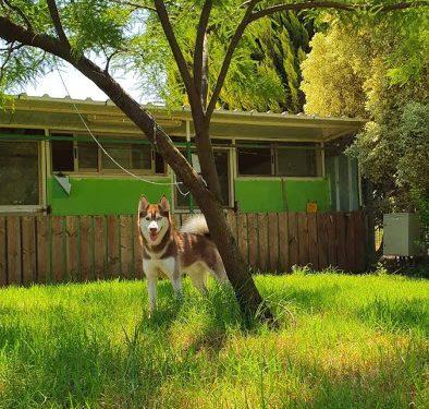פנסיון כלבים מבית יער הפרא
