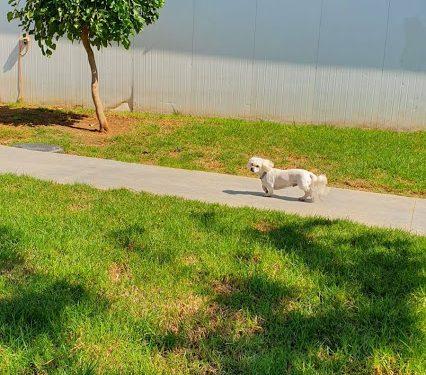 פנסיון לכלבים באווירה ביתית