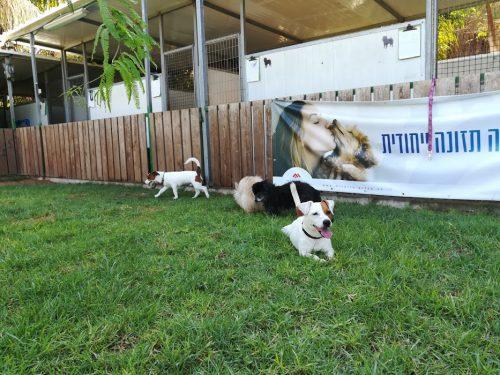 פנסיון מפואר לכלבים