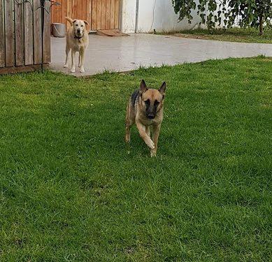 יער הפרא - פנסיון כלבים