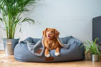 איך לבחור מיטות לכלבים?