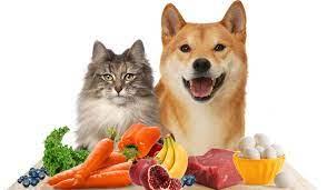 תזונה טבעית לכלבים וחתולים