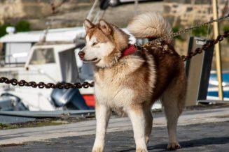 איך לבחור רצועה לכלב?